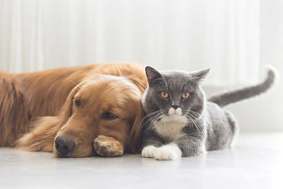 about our veterinary practice  Greensboro, NC